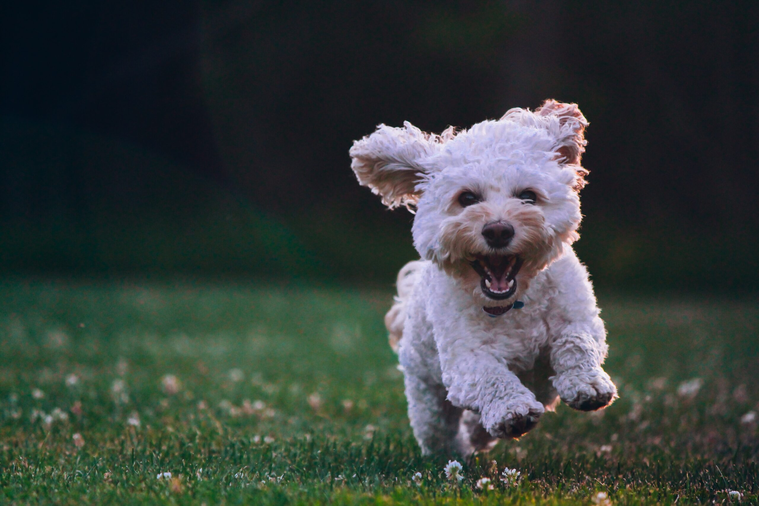 Unbridled Happiness